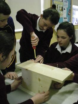 Making Bird Boxes