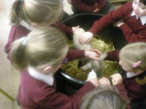 Lamb Visit
